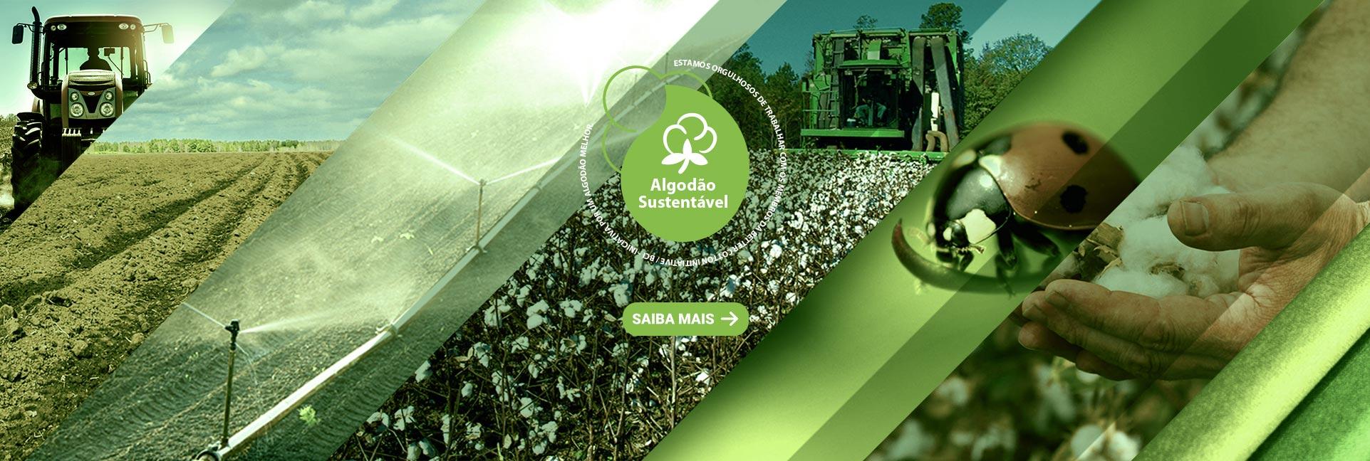 Algodão Sustentável - Política de Algodão Licenciado BCI - Better Cotton Initiative